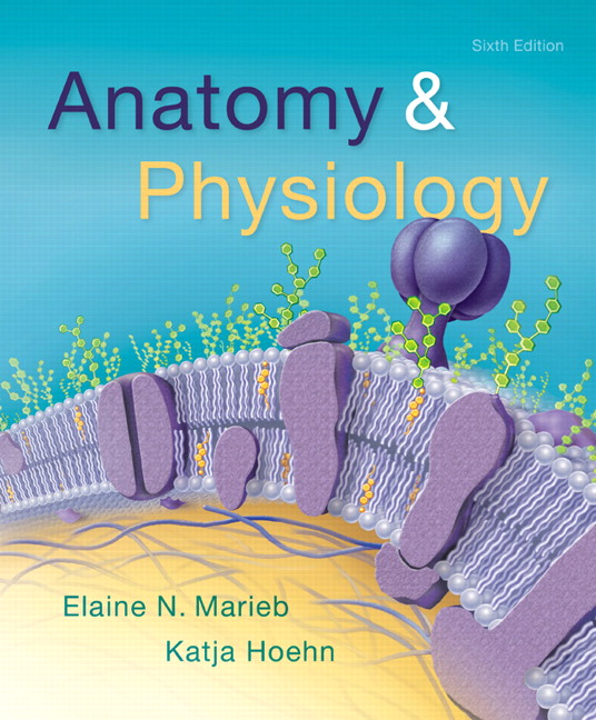 Marieb Hoehn Anatomy Physiology 6th Edition
