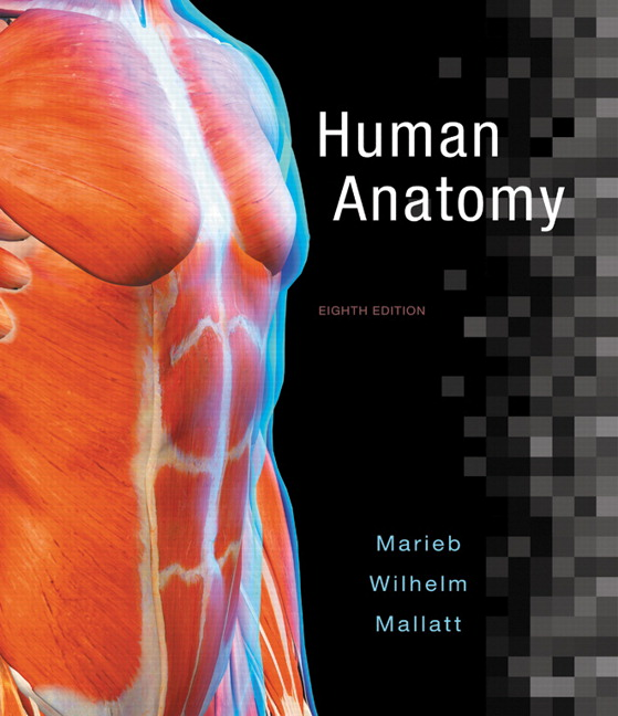 Marieb Wilhelm Mallatt Human Anatomy 8th Edition Pearson
