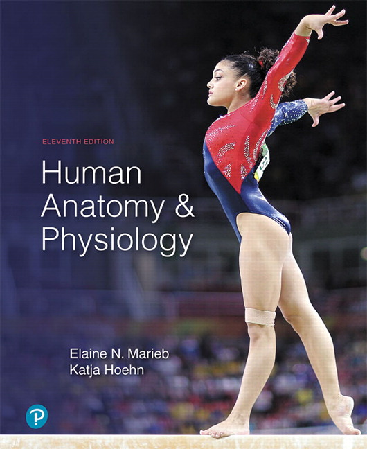 Marieb Hoehn Human Anatomy Physiology 11th Edition Pearson