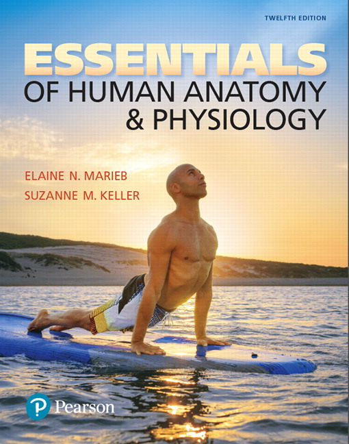 Marieb Keller Essentials Of Human Anatomy Physiology 12th