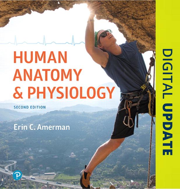 human anatomy and physiology amerman pdf