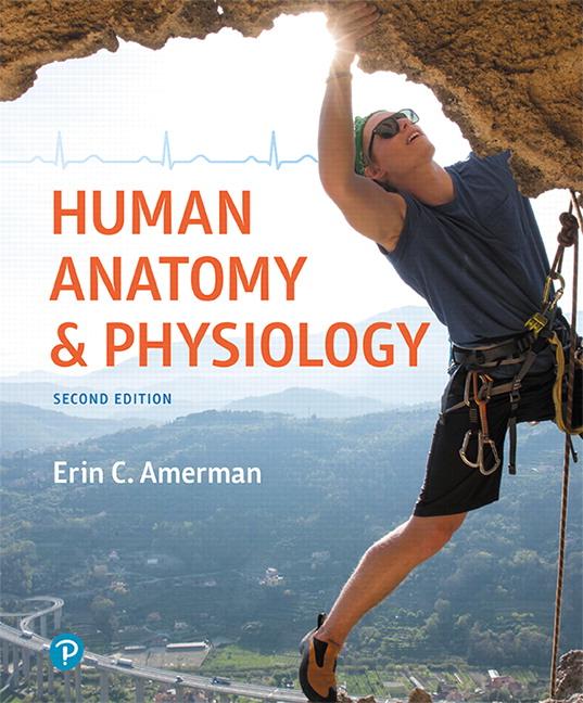 Amerman, Human Anatomy & Physiology, 2nd Edition   Pearson