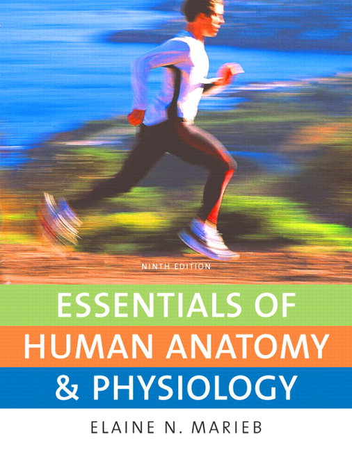 Marieb Essentials Of Human Anatomy Physiology With Essentials Of