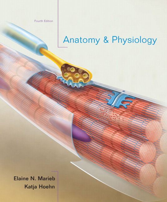 Funky Pearson Anatomy And Physiology Test Photo - Anatomy And ...