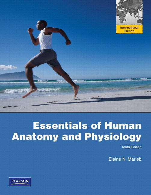 Essentials of Human Anatomy and Physiology with Essentials of Interactive Physiology CD-ROM: International Edition, 10th Edition