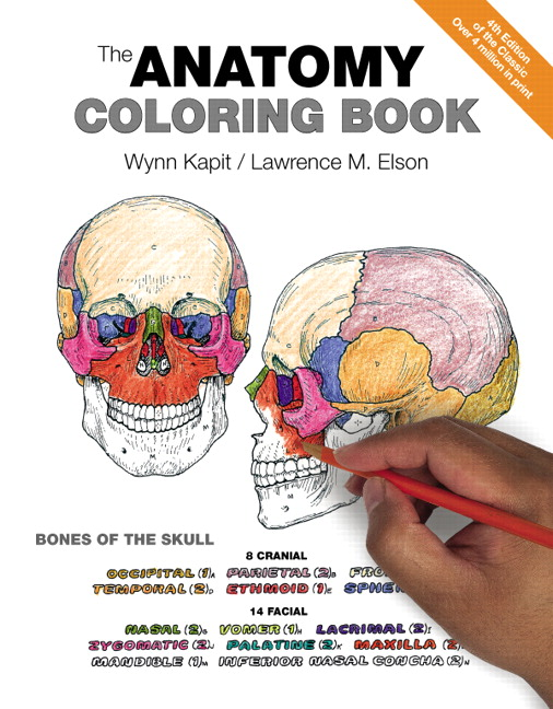 Anatomy Coloring Book The 4th Edition