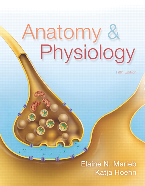 Marieb Hoehn Anatomy Physiology 6th Edition Pearson