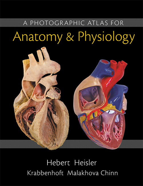 human anatomy and physiology laboratory manual 12th edition