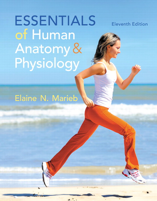 Marieb Essentials Of Human Anatomy Physiology 11th Edition Pearson