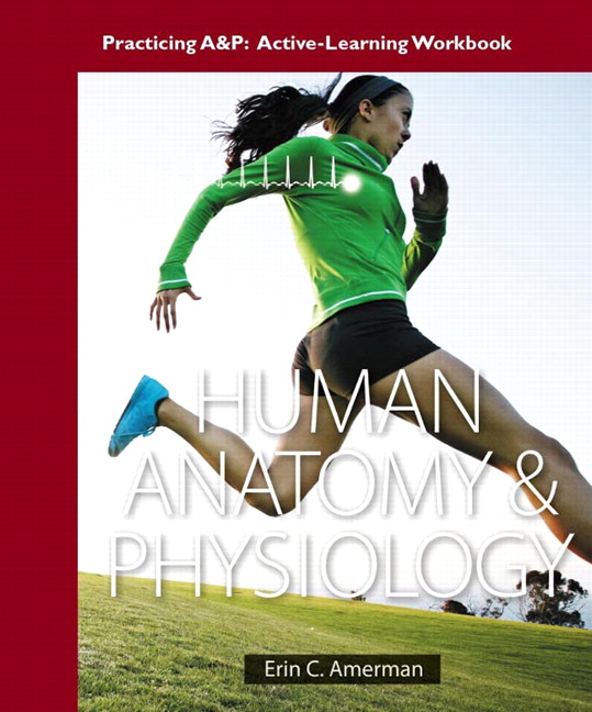 Amerman, Active-Learning Workbook for Human Anatomy & Physiology ...