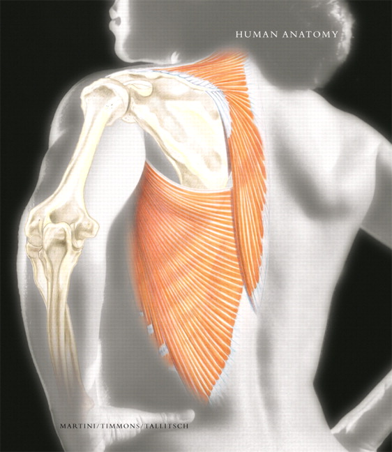Human Anatomy with Clinical Issues in Anatomy plus Access to Human Anatomy Place and Anatomy360 CD-ROM, 5th Edition