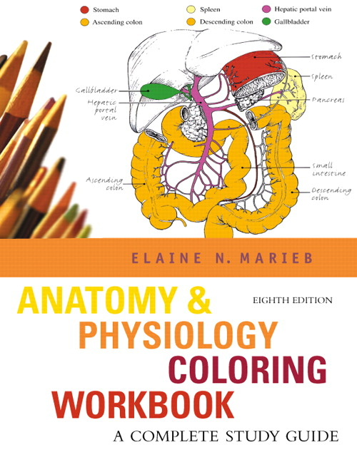 Marieb Anatomy Physiology Coloring Workbook A Complete Study Guide – Chapter 8 Special Senses Worksheet Answers