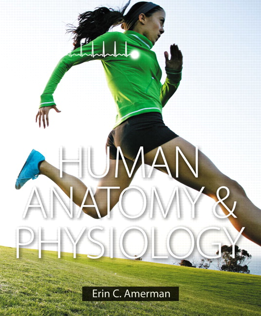 Amerman, Human Anatomy & Physiology, 2nd Edition | Pearson